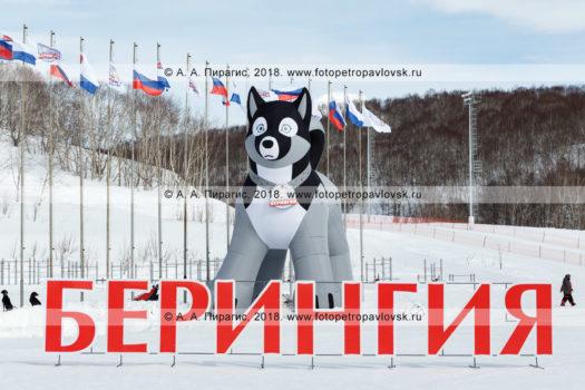 """Фотография: 10-метровая пневматическая фигура ездовой собаки породы хаски — символ камчатской традиционной гонки на собачьих упряжках """"Берингия"""""""