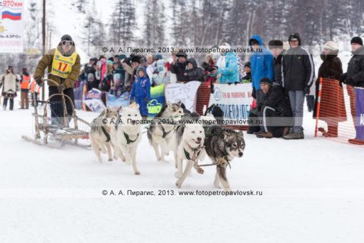 """Традиционная камчатская гонка на собачьих упряжках """"Берингия"""""""