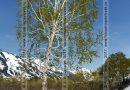 Береза в камчатском лесу