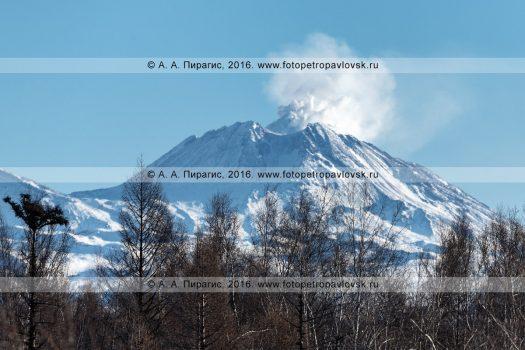 Фотография: зимний пейзаж полуострова Камчатка — действующий вулкан Безымянная сопка, или вулкан Безымянный в Ключевской группе вулканов