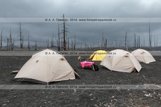 Фотография: туризм на полуострове Камчатка — туристические палатки, установленные на вулканическом шлаке в Мертвом лесу в районе Большого трещинного Толбачинского извержения (БТТИ)
