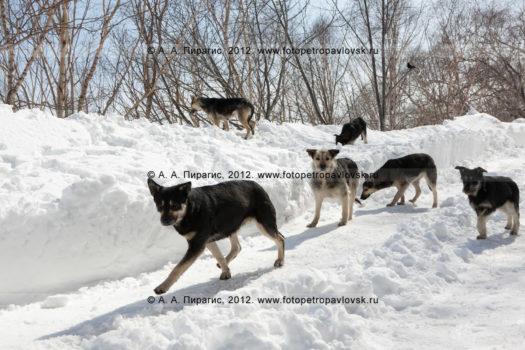 Фотографии бродячих собак в городе Петропавловске-Камчатском