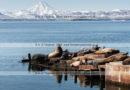 Фотосюжет: лежбище сивучей, или морских львов Стеллера в городе Петропавловске-Камчатском
