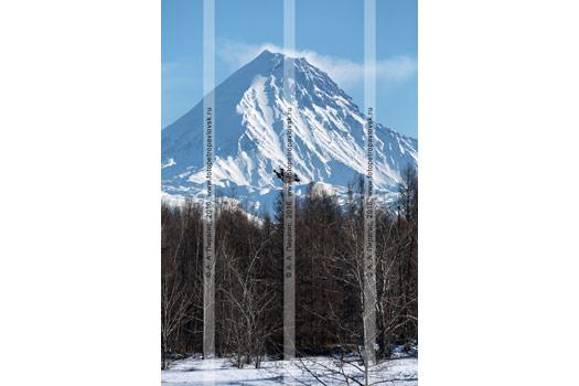 Фотография: зимний камчатский пейзаж — вулкан Камень (Kamen Volcano) в Ключевской группе вулканов на полуострове Камчатка