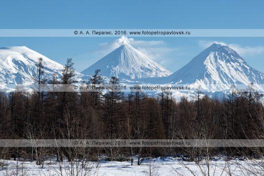 Фотография: красивый камчатский зимний пейзаж, вид на Ключевскую группу вулканов на полуострове Камчатка