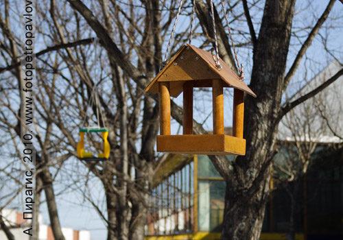 Фотография кормушки для птиц в городе Петропавловске-Камчатском