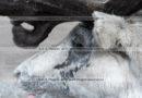 Фотографии камчатского северного оленя крупным планом