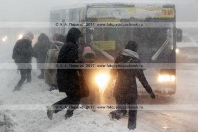 Фотография: зимняя непогода в городе Петропавловске-Камчатском, пассажиры бегут к подъехавшему на остановку городского общественного транспорта автобусу маршрута № 21 во время снежного циклона (пурги, метели)