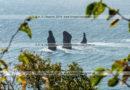 Фотографии скал Три Брата в Авачинской губе на полуострове Камчатка
