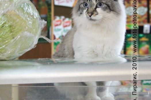 Фотография кота Васи